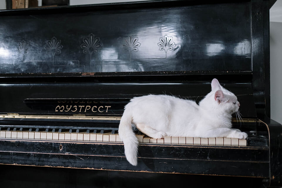 A cat on a piano