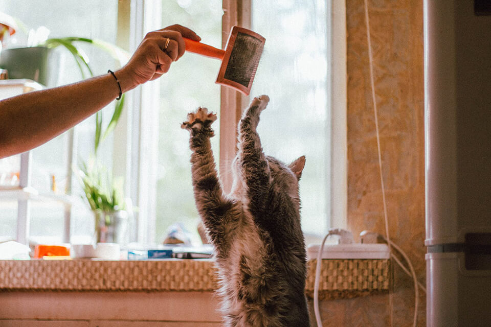 A cat playing with a brush